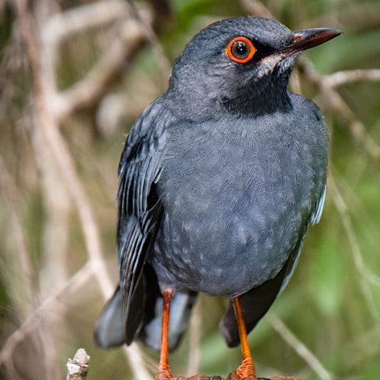 a bird at andros isle